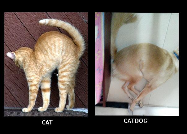 catdog-compare
