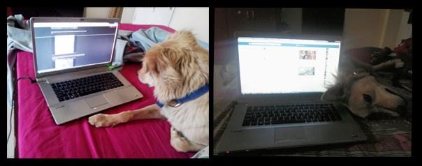 laptoplover